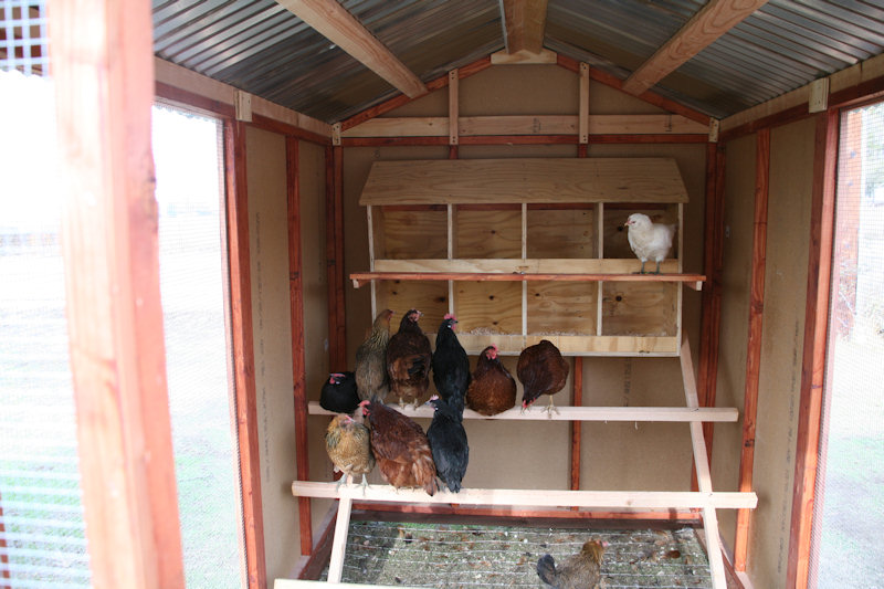 Chicken coop inside layout - photo#54